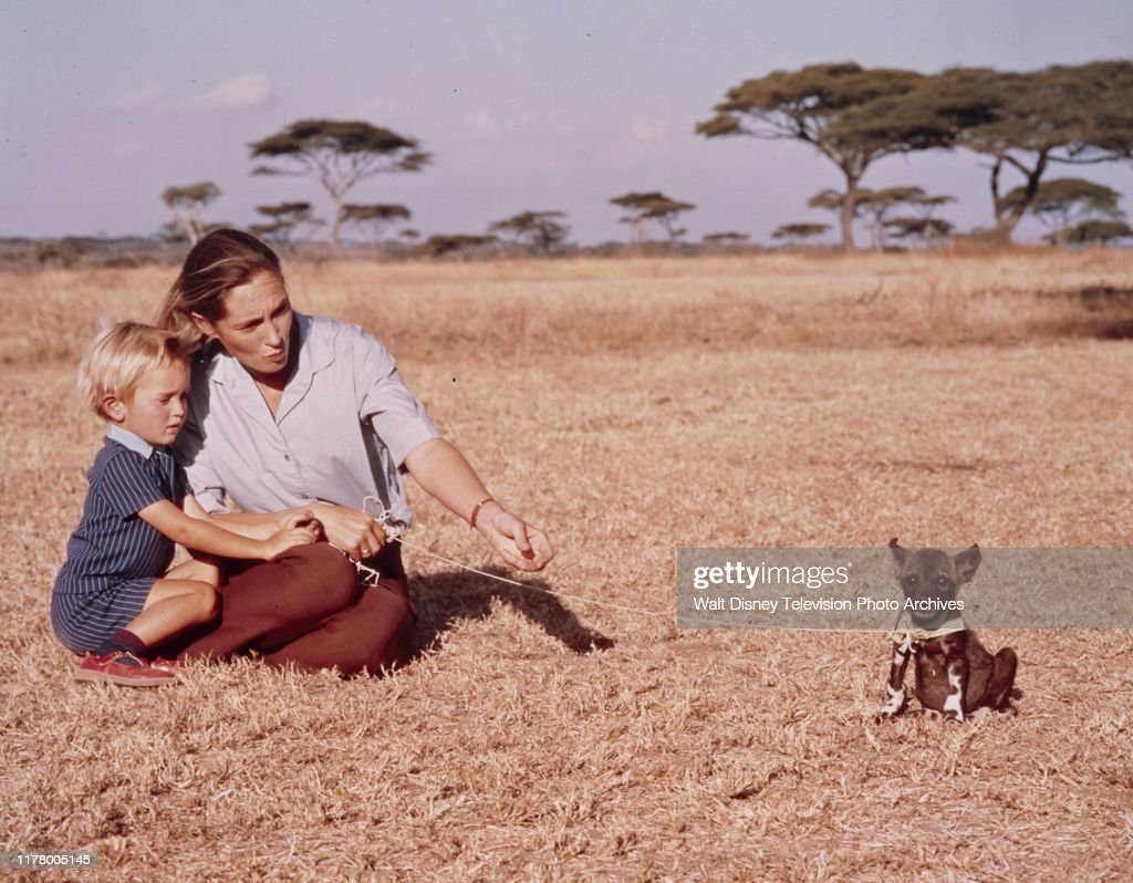 Jane Goodall And Family Appearing On 'The Wild Dogs Of Africa' : ニュース写真