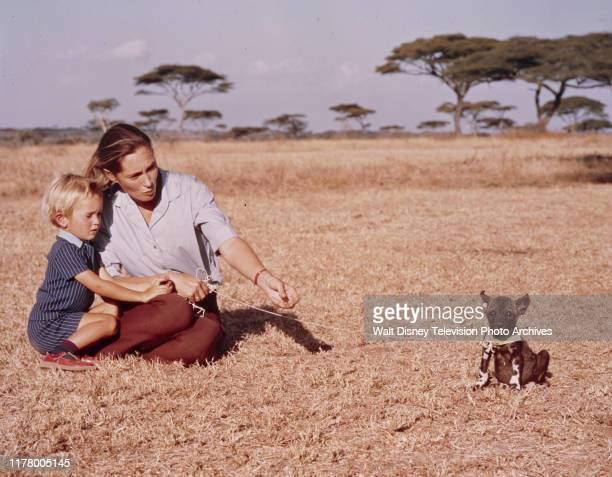 Hugo Eric Louis van Lawick Jane Goodall appearing on the ABC tv special 'The Wild Dogs of Africa'