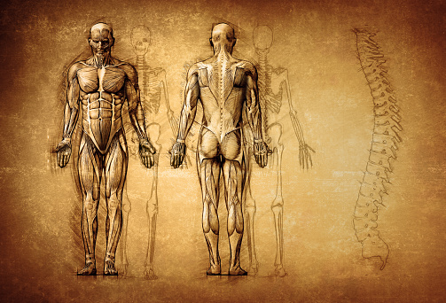 human anatomy drawing, old, canvas 667381086