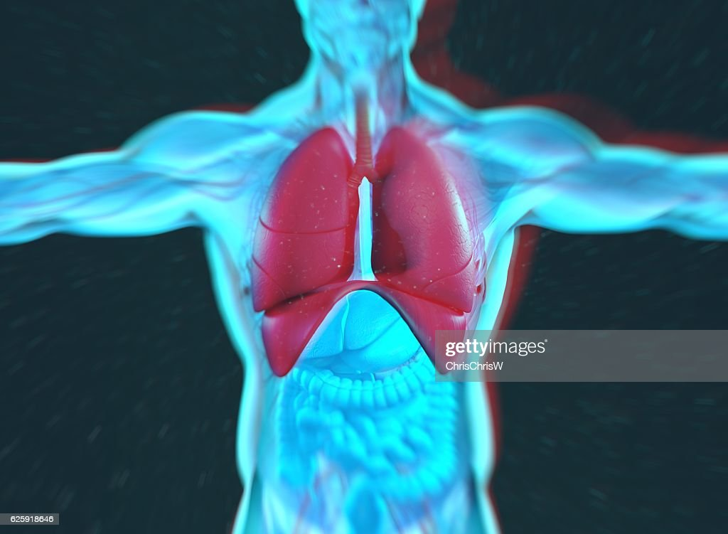 Human Anatomy Lungs Lung Cancer Disease Smoking Stock Photo | Getty ...
