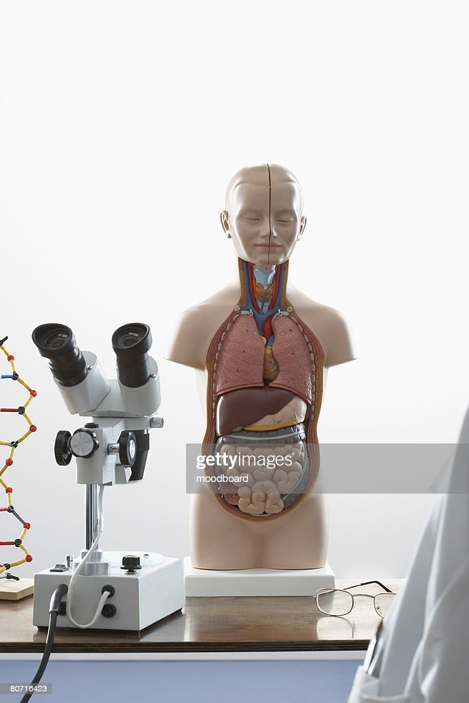 Human Anatomy Model And Microscope Stock Photo   Getty Images