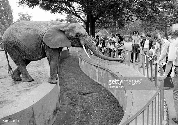 human and animal elephant in the Duisburg zoo stretches his trunk to get food of the visitors elephant and visitants are separated by a wide trench...