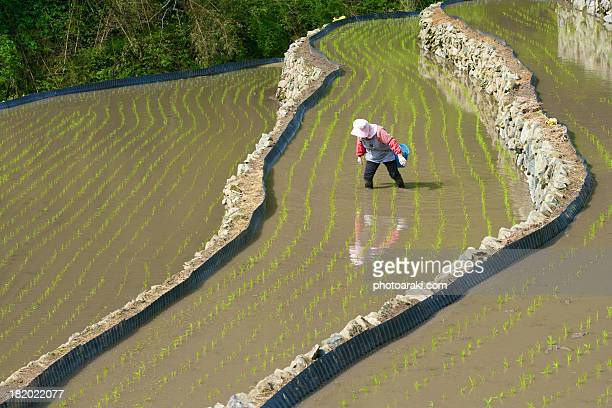 Human and rice field