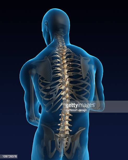 human back - anatomy stock pictures, royalty-free photos & images