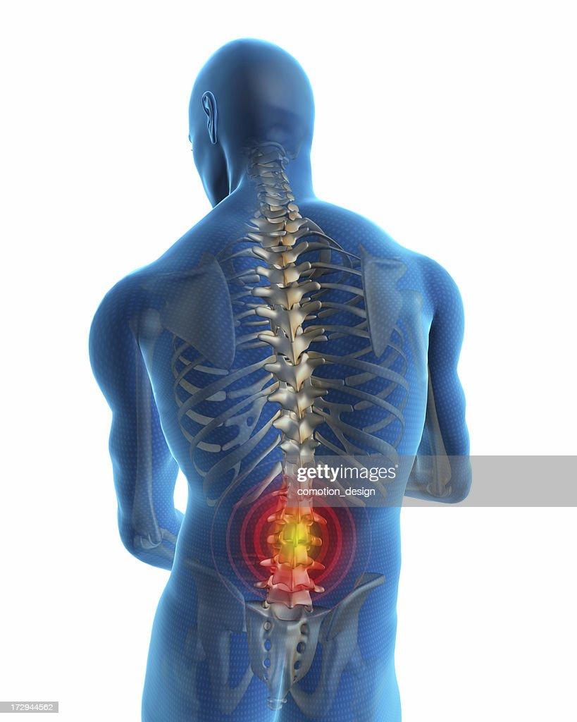 Espalda humana : Foto de stock