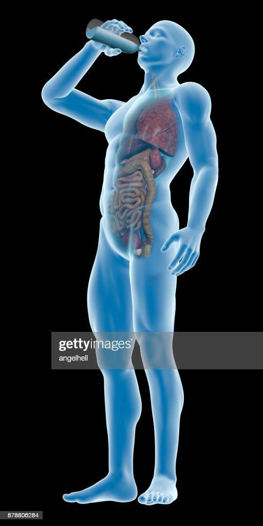 Menschlichen Körper Einen Mann Trinkwasser Flasche Inneren Organe ...