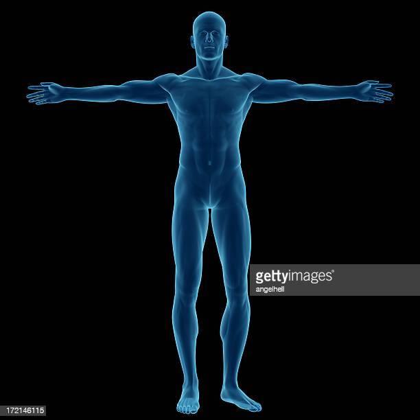 Menschlichen Körper eines Mannes für Studie