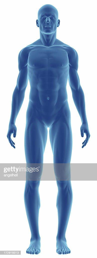 人体の研究のための男性 : ストックフォト