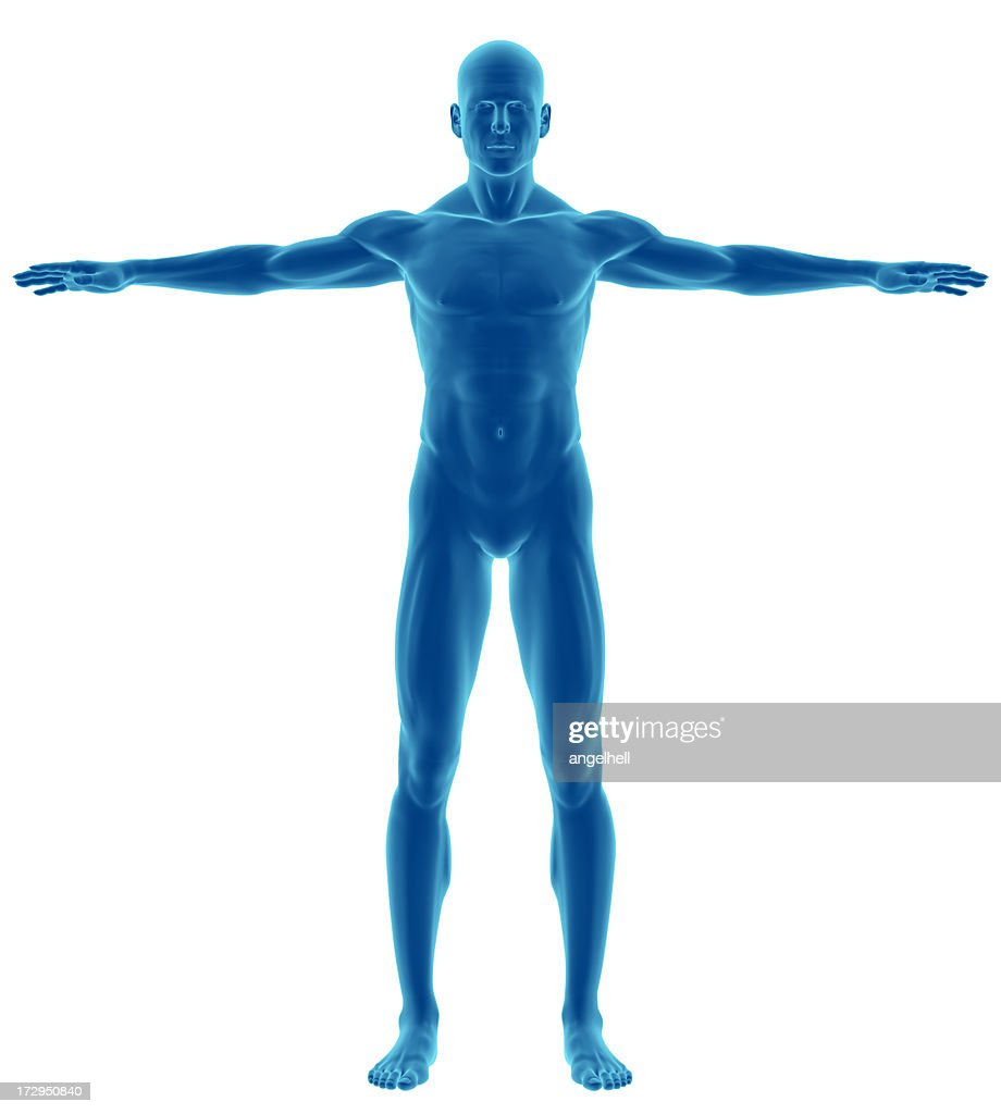 Human body of a man for study : Stock Photo