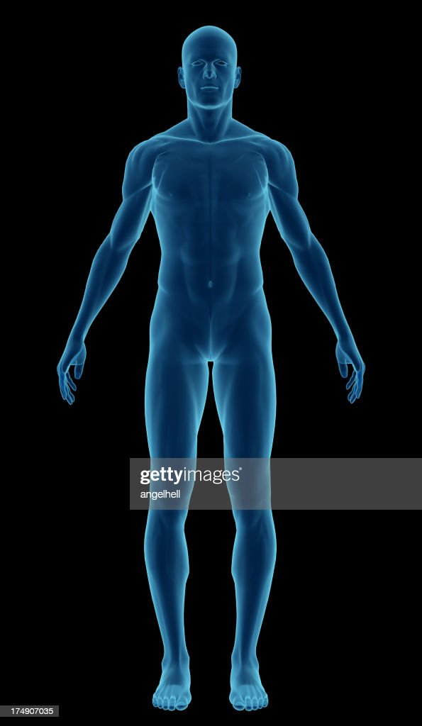 Human Body Of A Man Highlighting Your Muscles Stock Photo Getty Images