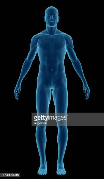 Human body of a man highlighting your muscles