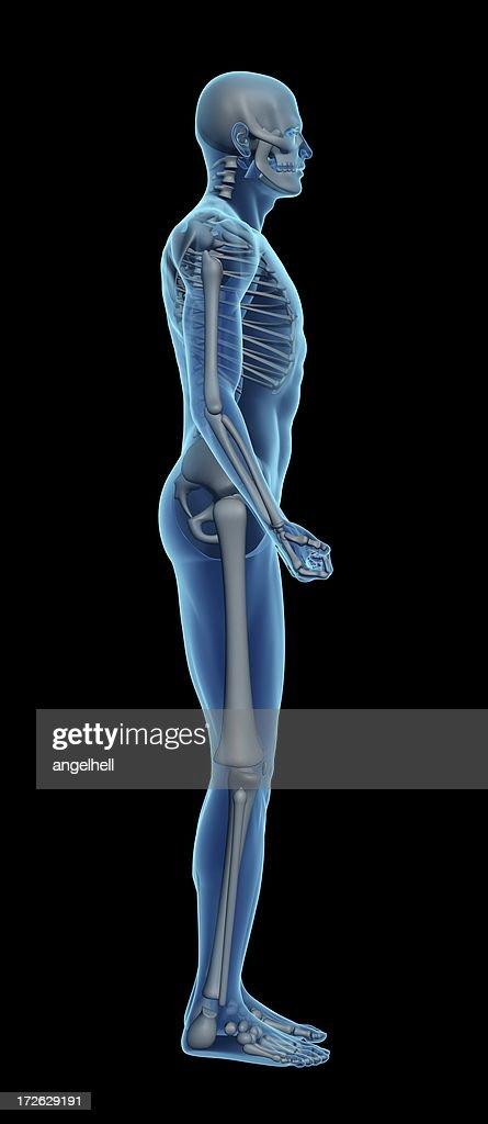 Menschlichen Körper Eines Mannes Mit Skelett Für Studie Stock-Foto ...