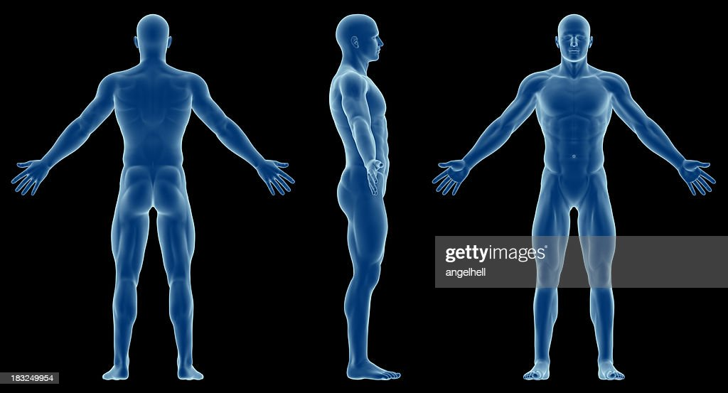 Human Body Of A Slim Man For Study Stock Photo | Getty Images