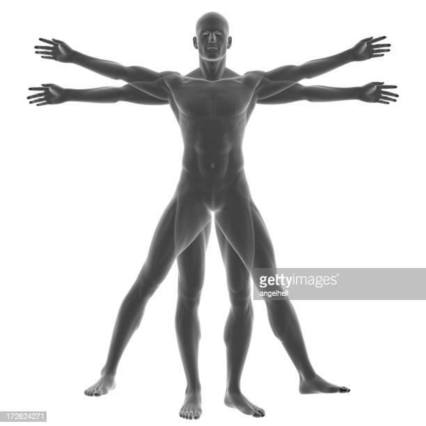 Human body of a Vitruvian man for study