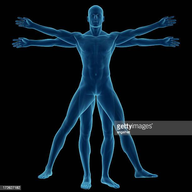 human body of a vitruvian man for study - leonardo da vinci stock pictures, royalty-free photos & images