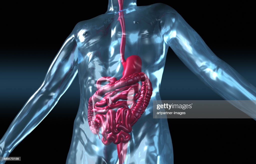 Human Body With Digestive System Stock Foto Getty Images