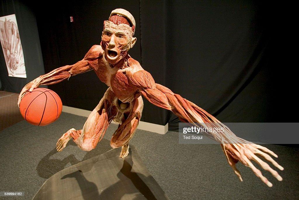 The Anatomical Exhibition Of Real Human Bodies Photos Et Images De