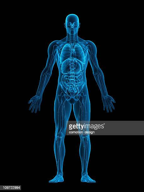 human body x-ray - human liver stock photos and pictures
