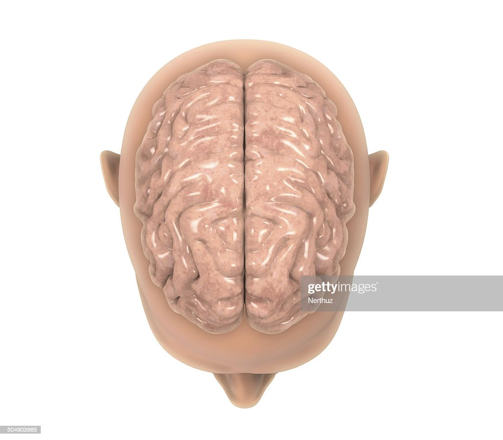 Menschliche Gehirn Anatomie Stock-Foto | Getty Images