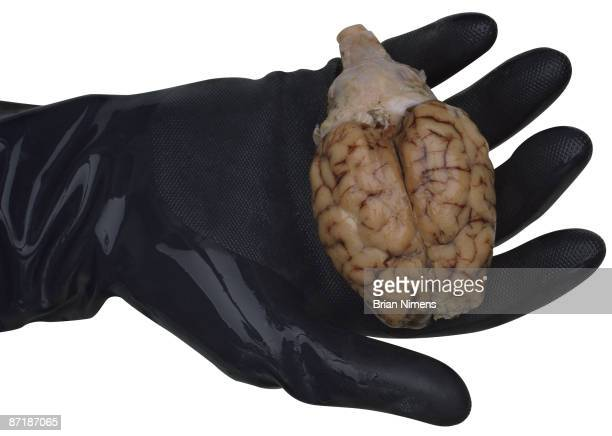 human brain in hand (clipping paths included) - cerebrum stock pictures, royalty-free photos & images
