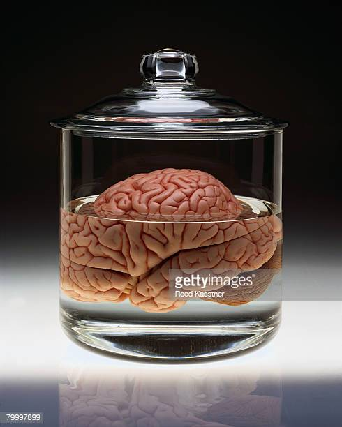 Human Brain in Specimen Jar