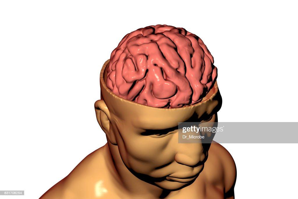 Menschliche Gehirn In Kopf Stock-Foto | Getty Images