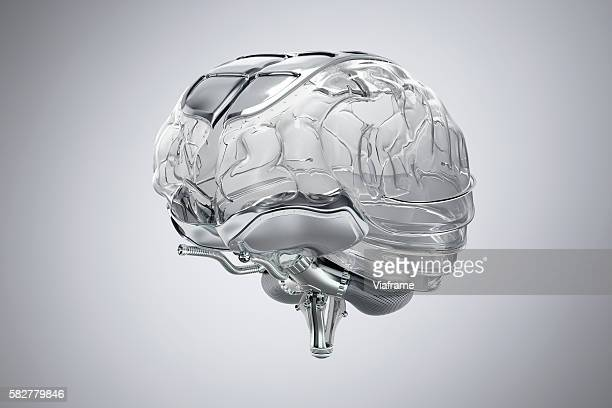Human Brain model made of glass