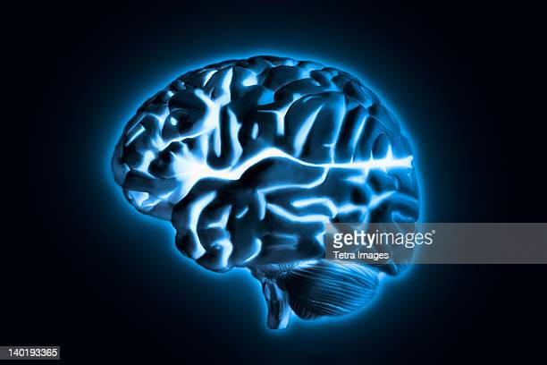 Human brain model with blue glow, studio shot