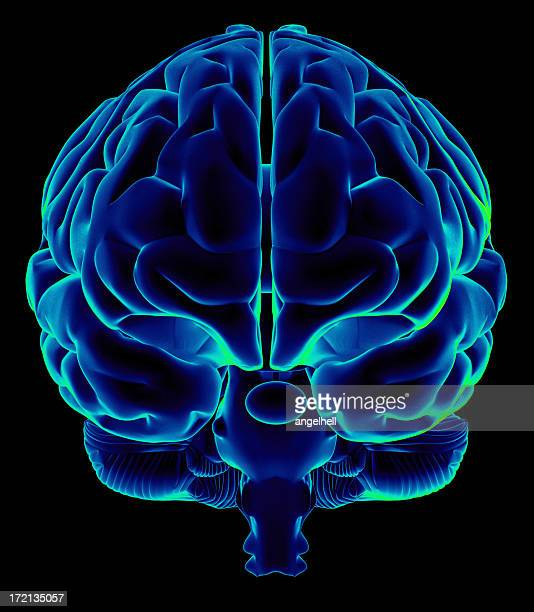 Human brain on front view