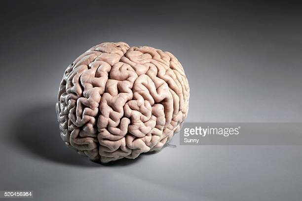 human brain - cerebrum stock pictures, royalty-free photos & images