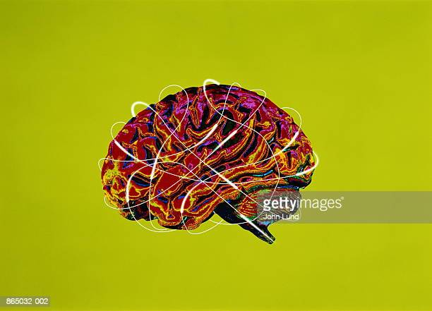 human brain, side view (digital composite) - john lund stock pictures, royalty-free photos & images