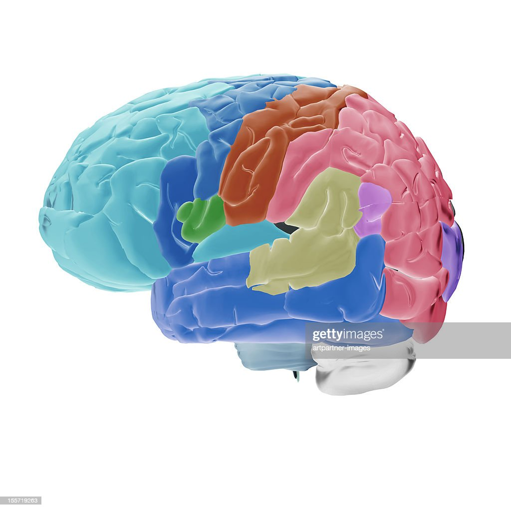 Human brain with color-coded areas, on white : Stock Photo