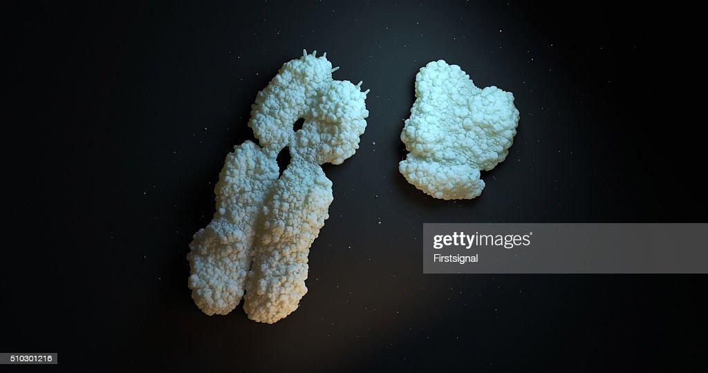 Human Chromosome : Stock Photo