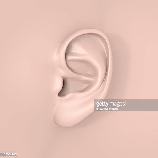 A human ear close-up