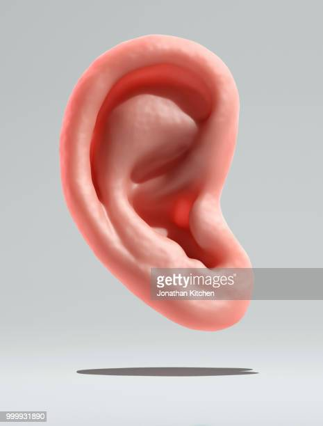 a human ear on a white background - ear stock pictures, royalty-free photos & images