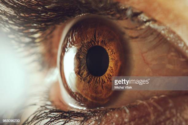 human eye - macro - eyesight stock photos and pictures