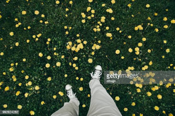 human feet standing in flower meadow full of yellow daisies - beautiful male feet stock photos and pictures