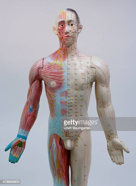 Human figure male with full body acupuncture markings and the marking of individual points with Chinese characters