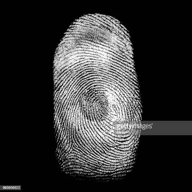 human fingerprint - criminal investigation stock pictures, royalty-free photos & images