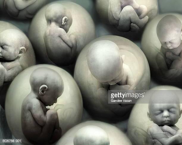 Human foetuses in eggs (Digital Composite)