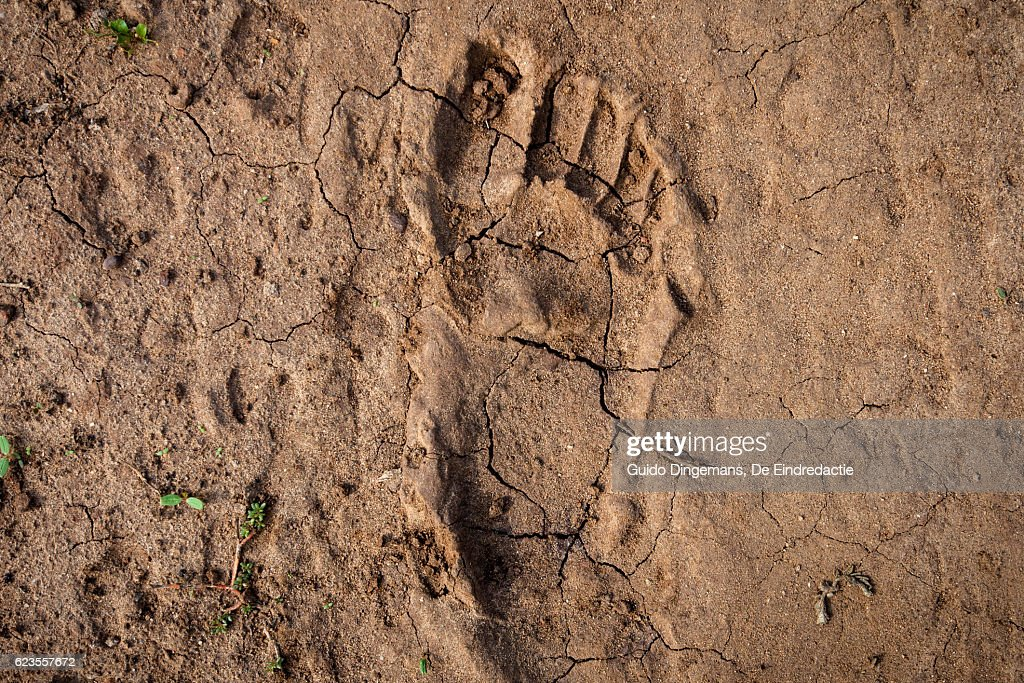 Human footprint in the East-African desert (Malawi) : Stock-Foto