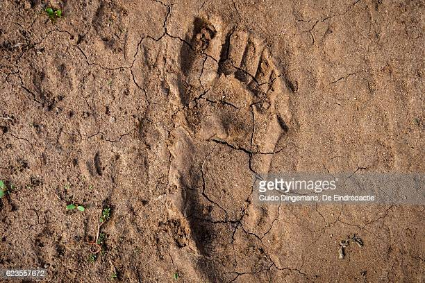 human footprint in the east-african desert (malawi) - un food and agriculture organization stock pictures, royalty-free photos & images