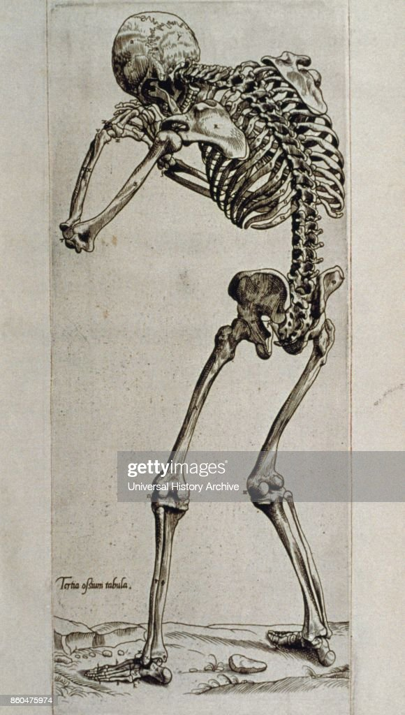Human form drawn by Andreas Vesalius Pictures | Getty Images