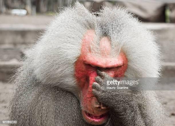 Human gesture, Crying monkey.