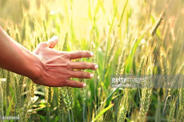 Menschliche Hand und sonniger Tag
