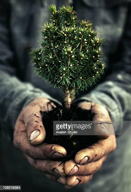Main humaine et arbre