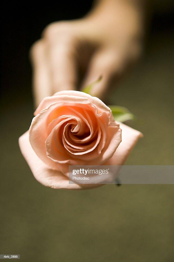 Human hand holding a rose : Foto de stock