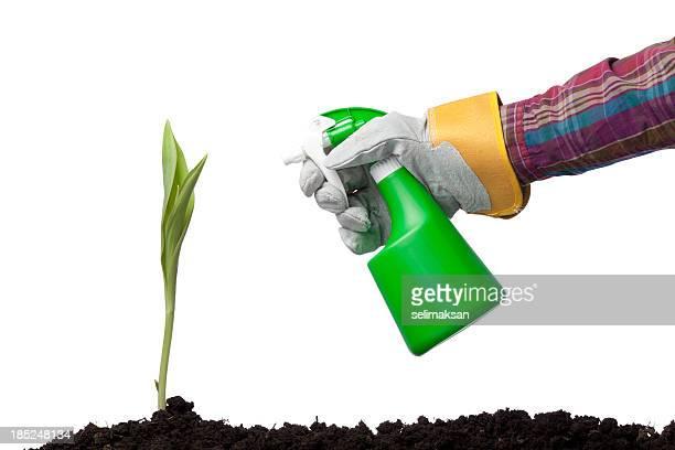 Mano humana sosteniendo planta aerosol más fresco sobre fondo blanco