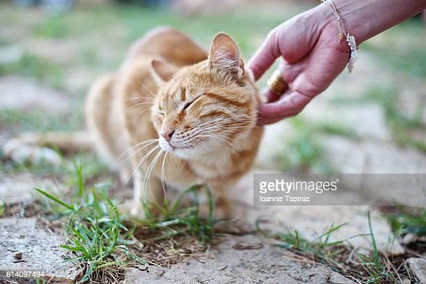 Human hand petting a cat