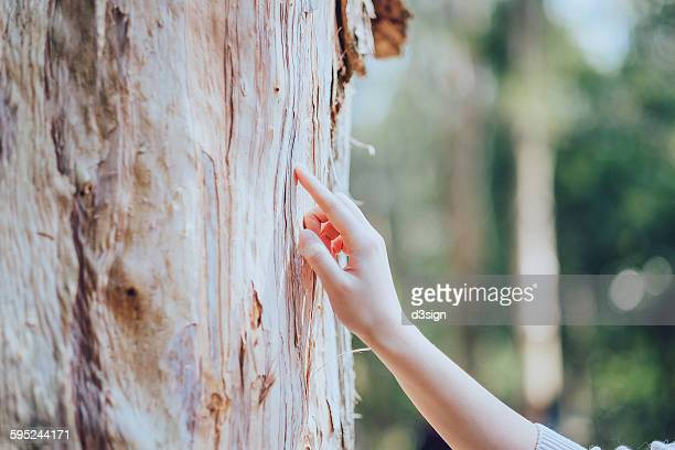 Human hand touching and feeling a huge tree trunk